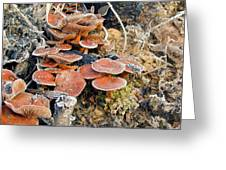 Frosted Cascading Mushrooms Greeting Card