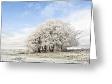 Frosted Copse Greeting Card by Anne Gilbert