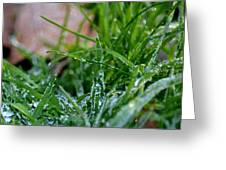 Frosted Dew Greeting Card