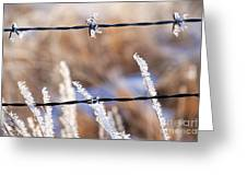 Frosted Fence Line Greeting Card