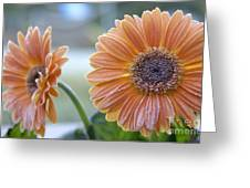 Frosted Gerberas Greeting Card