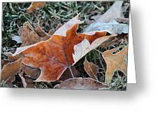 Frosted Leafs Greeting Card