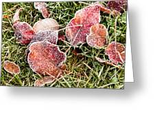 Frosted Leaves Greeting Card
