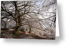 Frosted Path Greeting Card