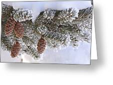 Frosted Pine Tree And Cones 1 Greeting Card