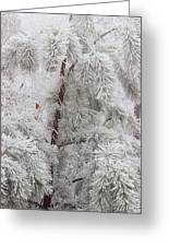 Frosted Pines Greeting Card