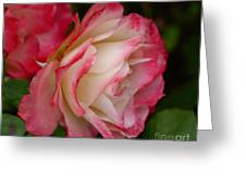 Frosted Rose Greeting Card