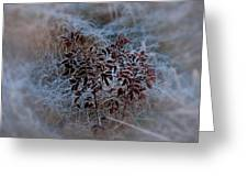 Frosted Rugosa Greeting Card