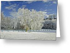 Frosted Trees - Newton Road Park Greeting Card