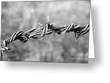 Frosty Barb Wire Greeting Card
