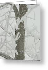 Frosty Branches Greeting Card