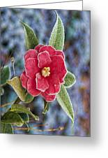 Frosty Camellia - Phone Case Design Greeting Card