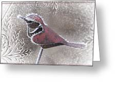 Frosty Cardinal Greeting Card