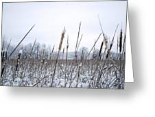 Frosty Cattails Greeting Card