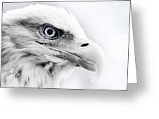 Frosty Eagle Greeting Card by Shane Holsclaw