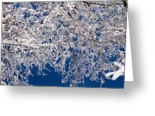 Frosty February Morning Greeting Card