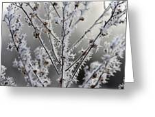 Frosty Field Plant Greeting Card