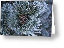 Frosty Fort Collins Morning Greeting Card by Michael Gourley