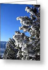 Frosty Limbs Greeting Card