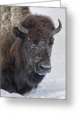 Frosty Morning Bison Greeting Card