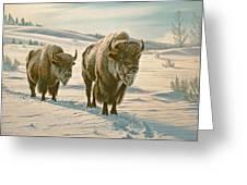 Frosty Morning - Buffalo Greeting Card