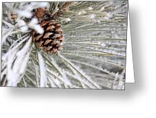 Frosty Norway Pine Greeting Card