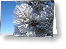 Frosty Pine Cone 2 Greeting Card