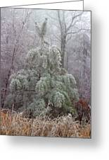 Frosty Pine Greeting Card