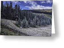 Frosty Pines Greeting Card by Tom Wilbert