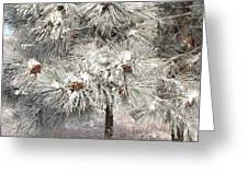 Frosty Pinetree Greeting Card