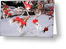 Frosty Rosehips Greeting Card