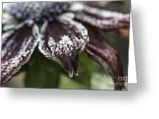 Frosty Rudbeckia Greeting Card