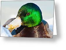 Mallard On Ice Greeting Card