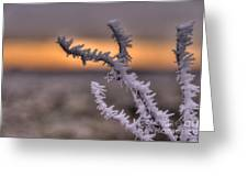 Frosty The Twig  Greeting Card