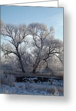 Frosty Trees 4 Greeting Card
