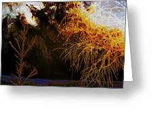 Frosty Winter Morning Greeting Card