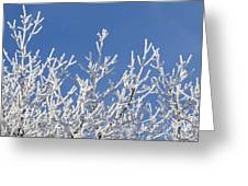 Frosty Winter Wonderland 01 Greeting Card