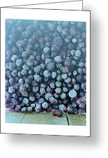 Frozen Blueberries Greeting Card