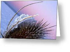 Frozen Cactus Greeting Card