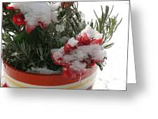Frozen Christmas Flowers Greeting Card
