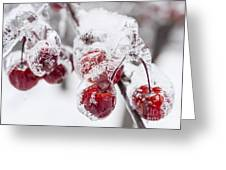 Frozen Crab Apples On Snowy Branch Greeting Card