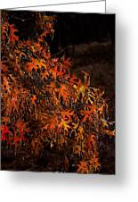 Frozen Fall Leaves Greeting Card