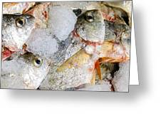 Frozen Fish On Ice Greeting Card