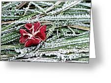 Frozen Flower Greeting Card
