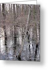 Frozen Forest Floor Greeting Card
