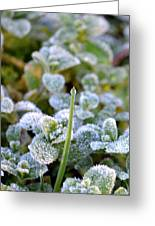 Frozen Green Spear Greeting Card