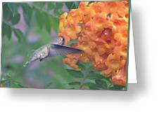 Frozen Hummingbird Greeting Card