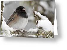 Frozen Junco Greeting Card