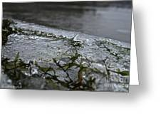 Frozen Milfoil Greeting Card