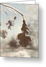 Frozen Oak Leaf Abstract Nature Detail Greeting Card